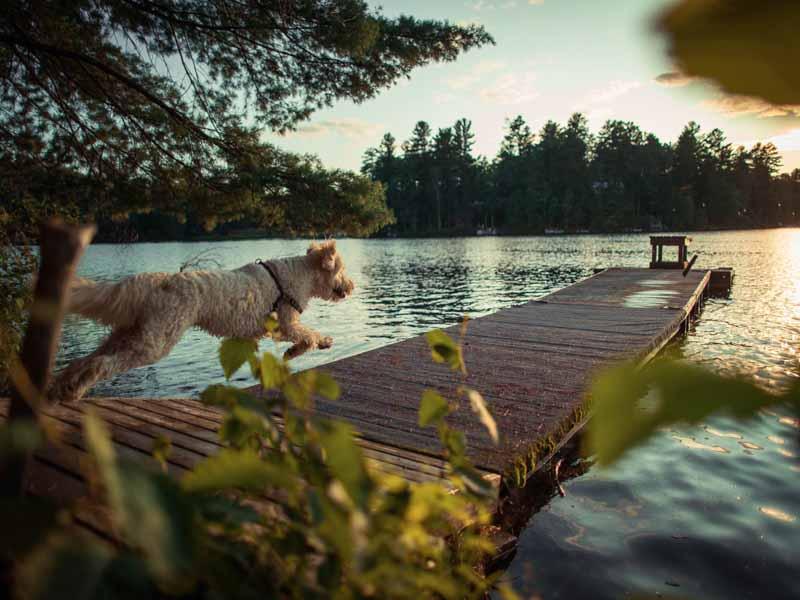 Perro corriendo por un embarcadero hacia el lago