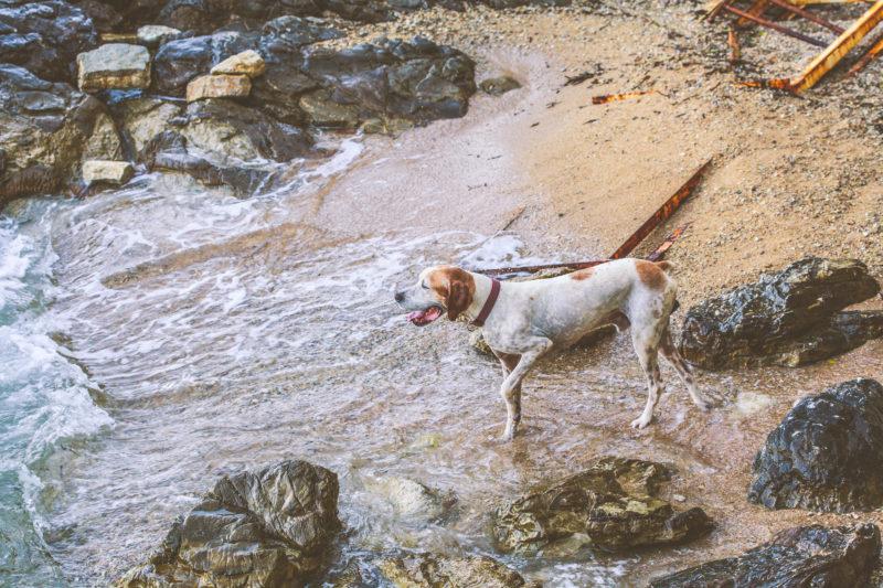 Perro en una playa de la costa brava