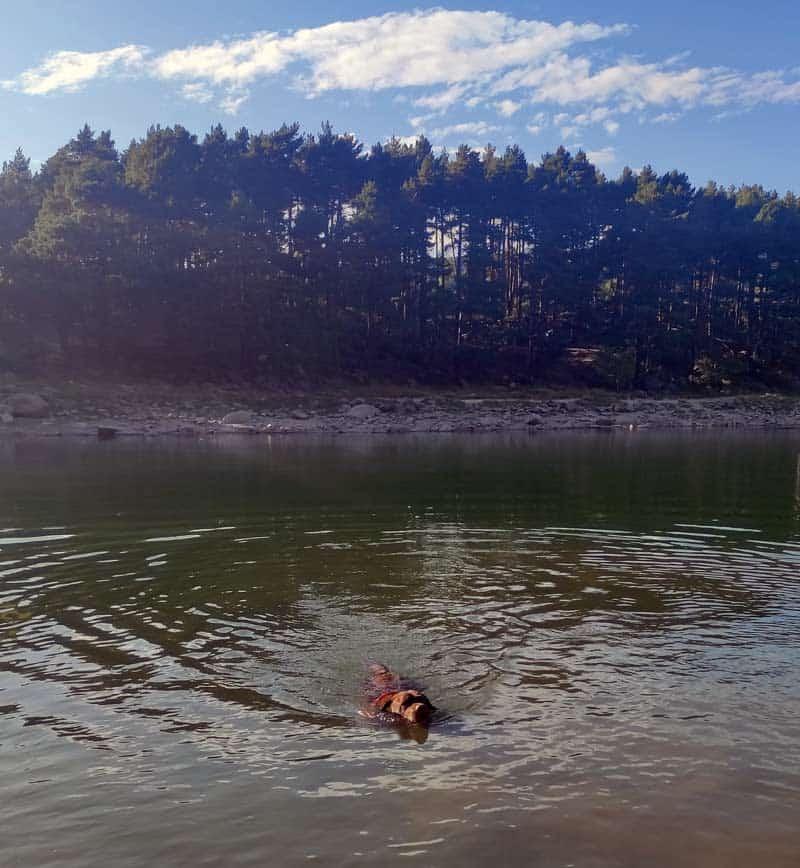 Perro bañandose en el lago de engolasters