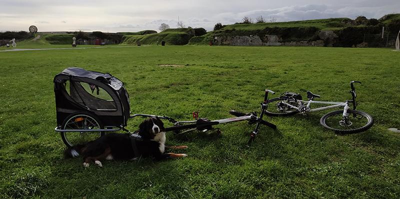 Perro con remolque de bicicleta