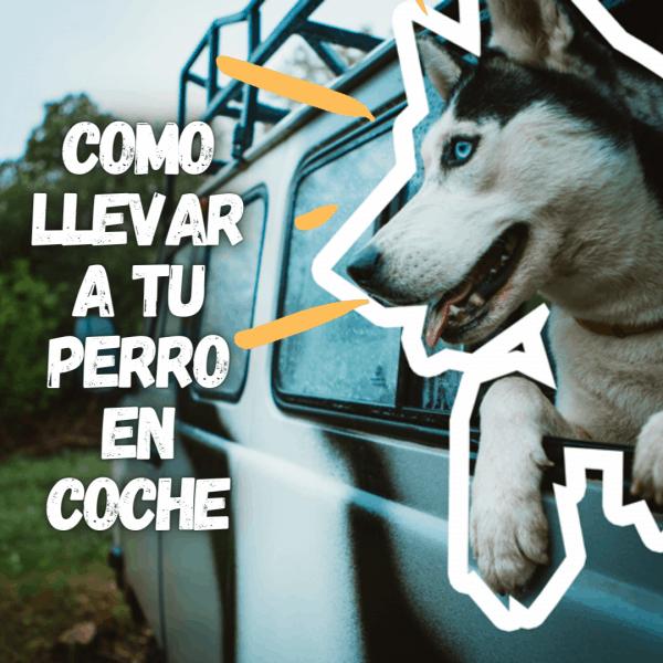 perro sacando la cabeza por la ventanilla de un coche