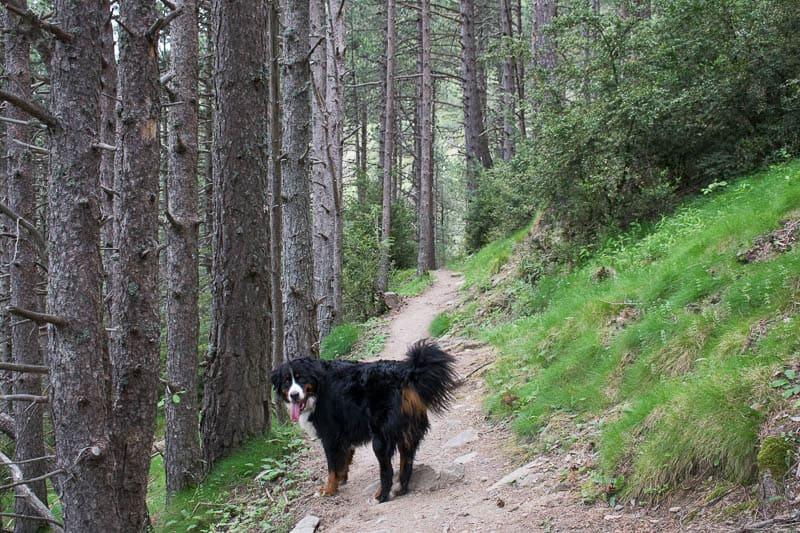 Camino interparroquial Encamp-Prats