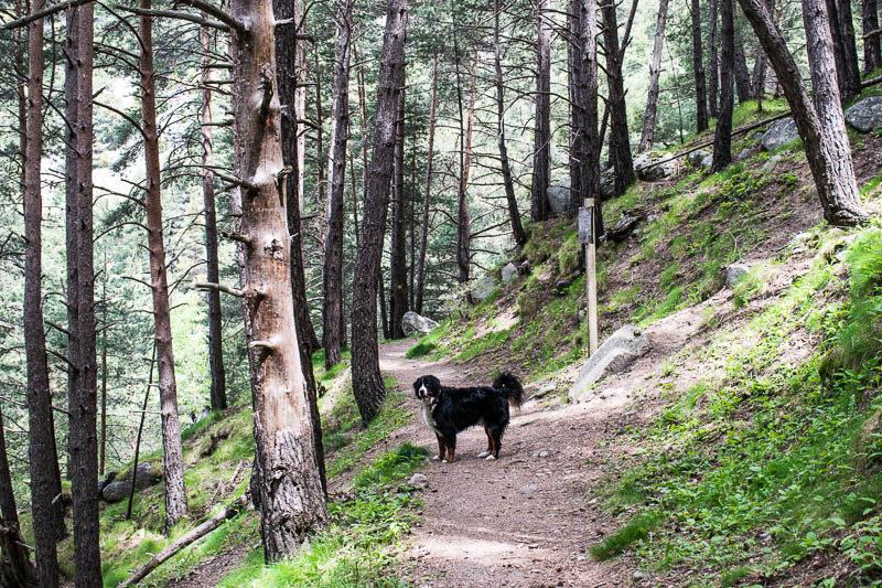 Perro de excursion bosque