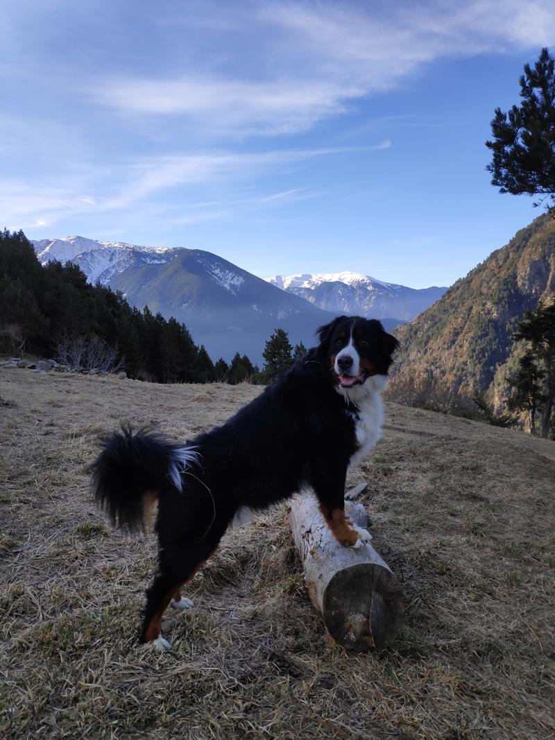 Perro posando sobre un tronco