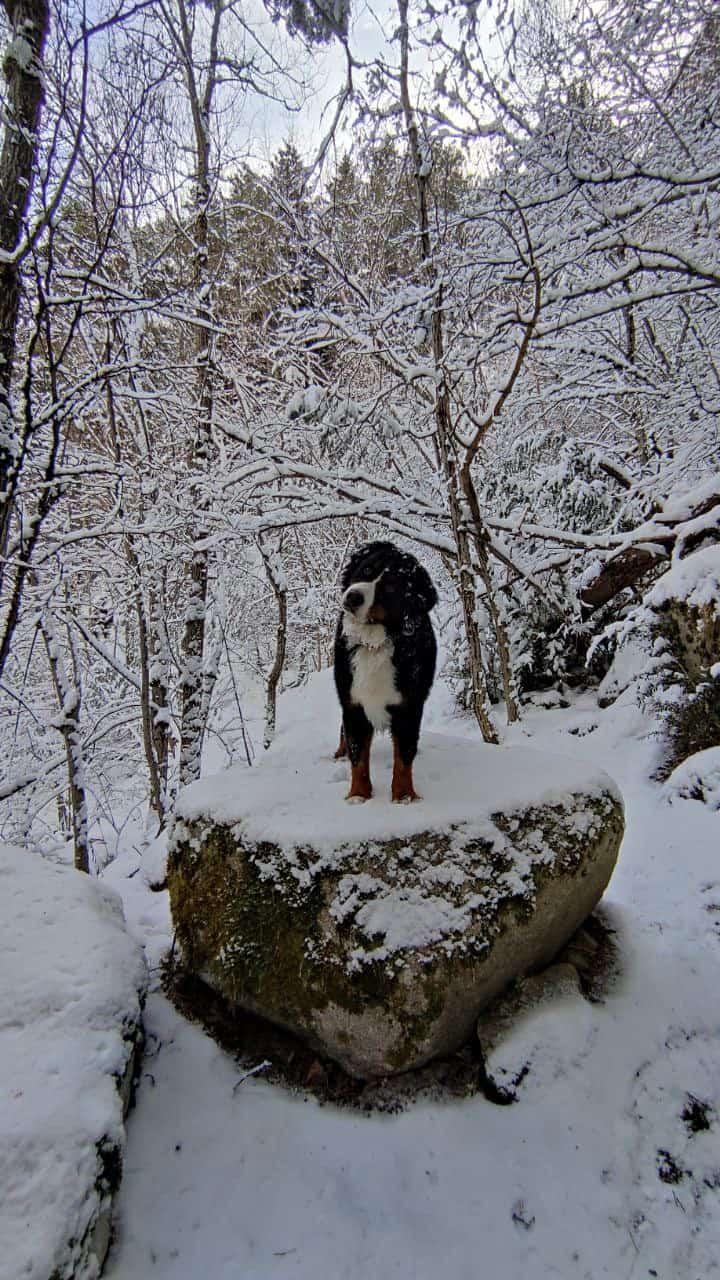 Perro en un bosque nevado