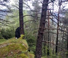 Excursión de Encamp al Camí de les Pardines