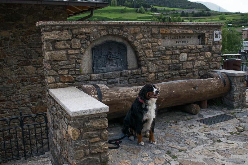 Perro delante de la fuente