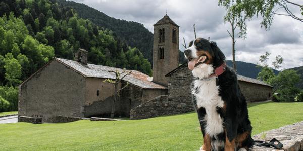 Andorra con perro Sant Marti de la Cortinada