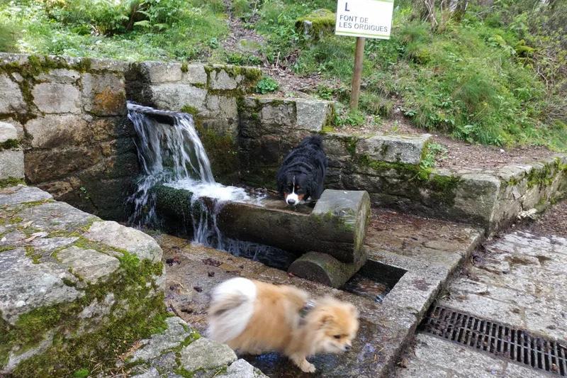 Perros bebiendo agua de una fuente