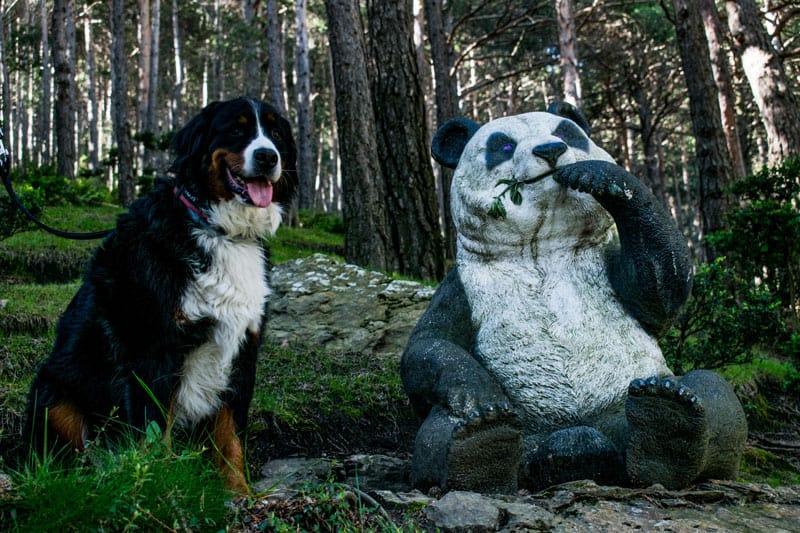 Escultura oso panda con un perro