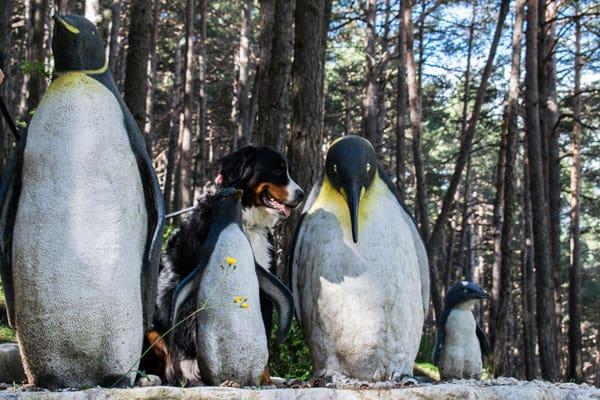 Esculturas de pinguinos
