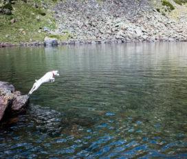 Lago del Querol,  Salamandres y Estanyons