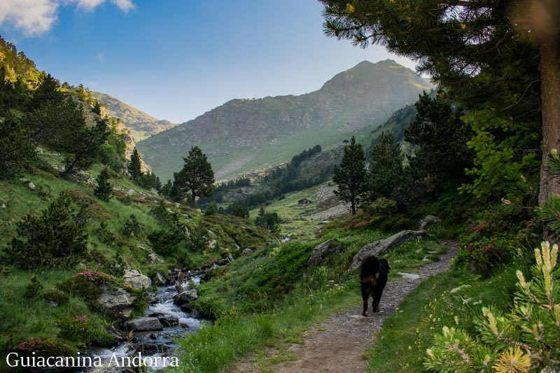 Valle de Rialb
