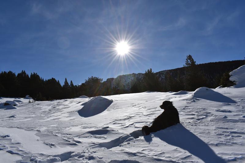 Perro en la montaña nevada