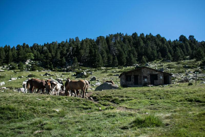 Caballos pastoreando delante de un refugio de montaña