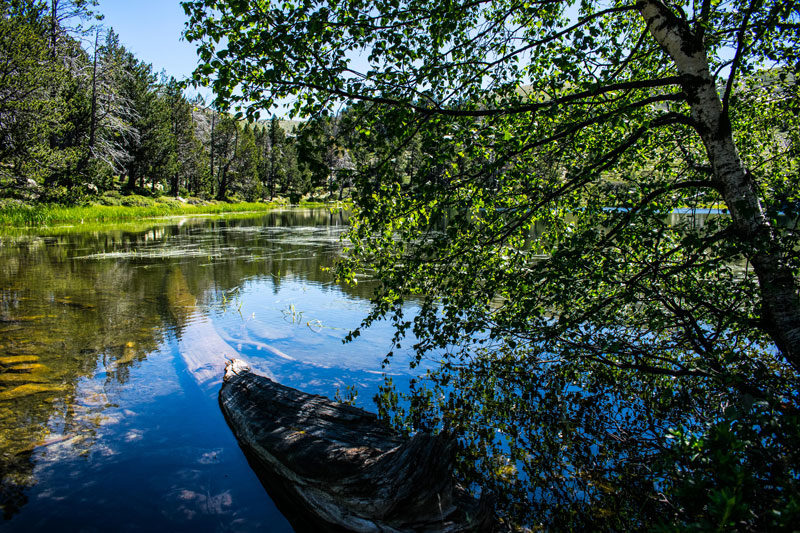 tronco hundido en el lago de la nou