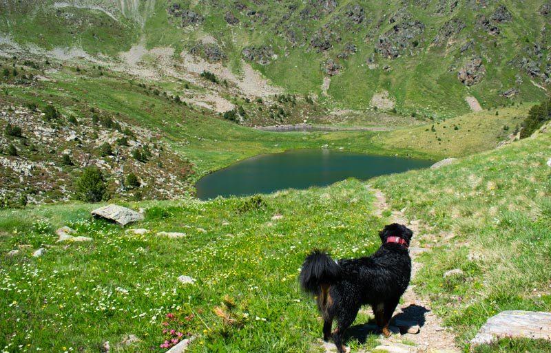 Perro mirando a un lago