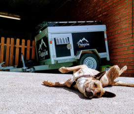 Passeja'm residència Canina Andorra