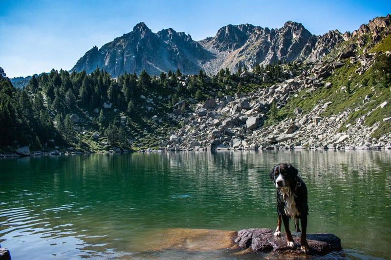 Perro encima de una roca de un lago