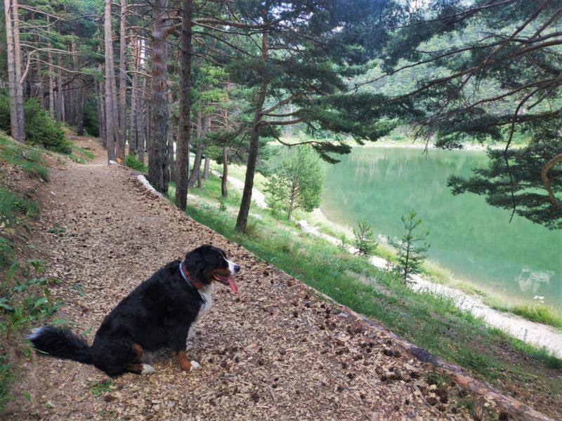 Perro mirando un lago