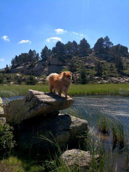 Perro en los lagos de pessons Andorra