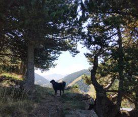Soldeu – Vall d'Incles