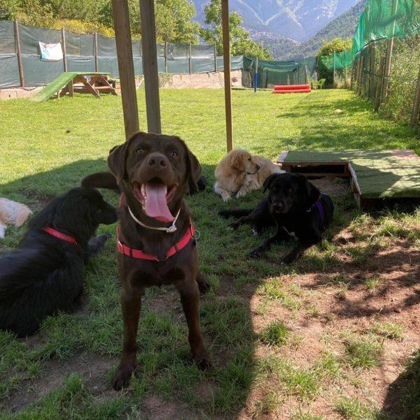 Perros esperando en un recinto cerrado