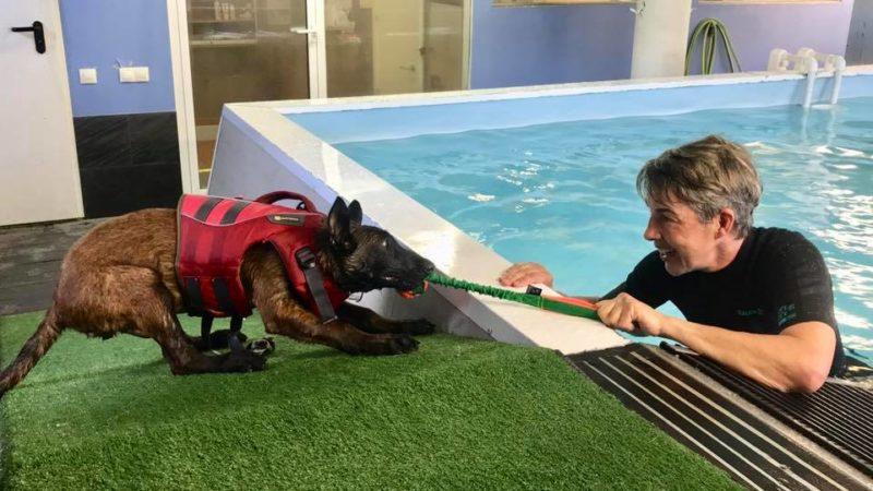 Terapeuta y perro en plena sesion de hidroterapia canina