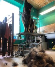 Peluqueria canina en Andorra