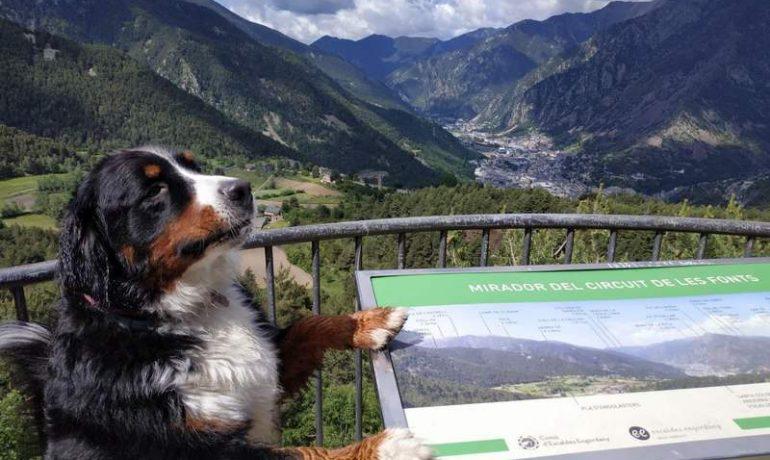 3 excursiones fáciles en Andorra para hacer con perros senior