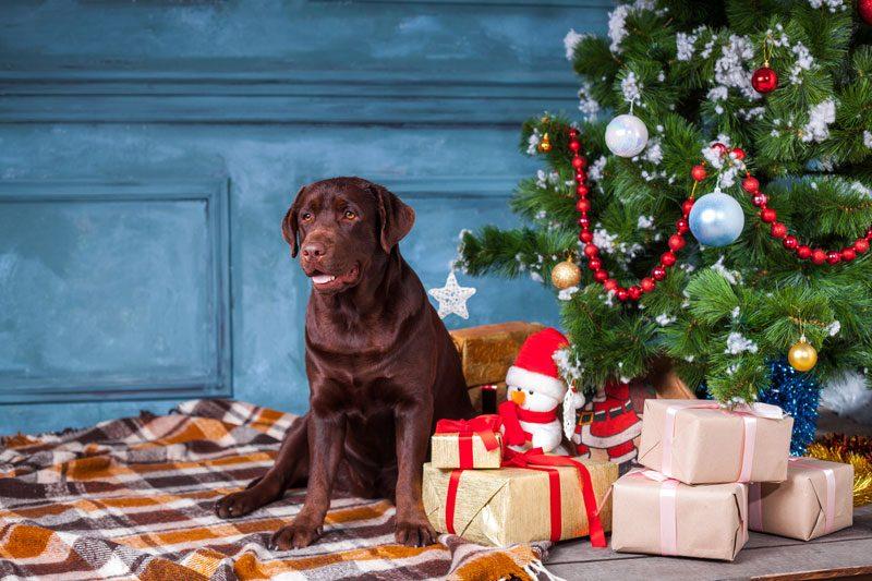 Perro bajo un arbol de navidad con regalos