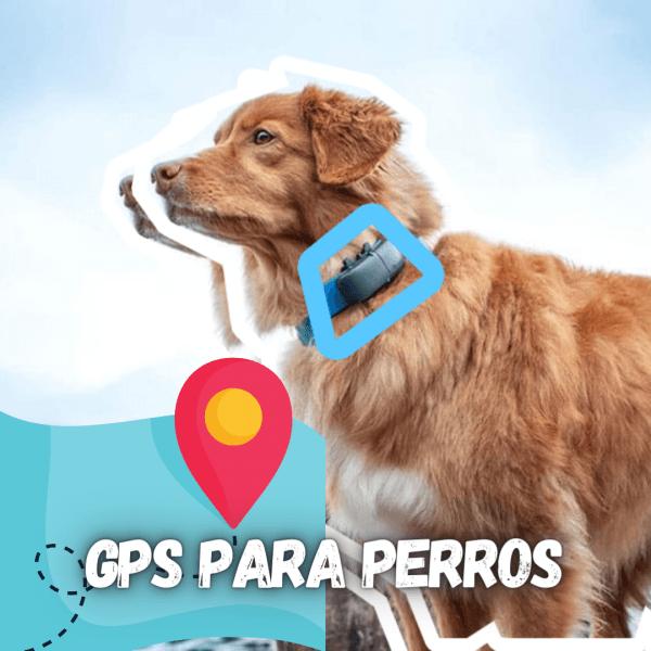 perro con gps enganchado al collar