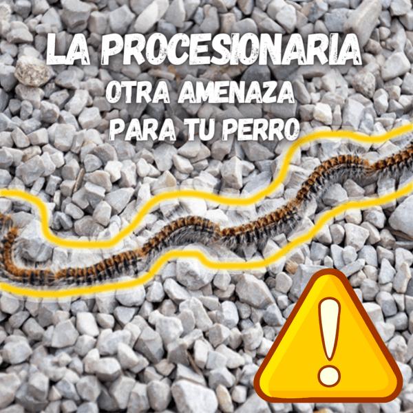 Cartel de aviso sobre los procesionaria